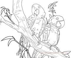 macaw coloring pages at coloring page eson me