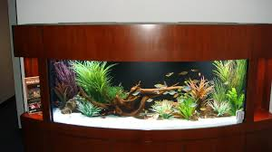 transform the way your home looks using a fish tank fish tank