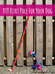 the flirt pole dog toy or life changer notes from a dog walker