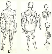 how to draw the human figure drawing body head features