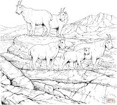 free coloring pages goats mountain goat coloring pages free coloring pages