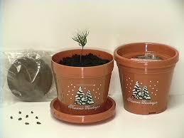 christmas tree seeds christmas lights decoration