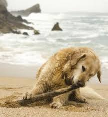 Cottages That Allow Dogs by Dog Friendly Coastal Cottages By The Sea Cornwall To Scotland