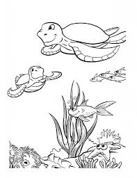 seaturtle colouring pages for kids
