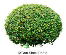 ornamental shrub images and stock photos 5 183 ornamental shrub