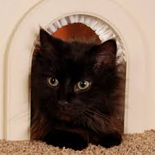 Interior Pet Door For Cats How To Teach Your Cat To Use The Cat Flap Cat My Love