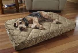 choosing the right dog bed lovetoknow