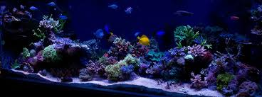Floating Aquascape Reef2reef Saltwater And Reef Aquarium Forum - re scaping a 180g ideas pics reef2reef saltwater and reef