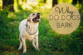 Can You Bury A Dog In Your Backyard Why Do Dogs Bark What Are The Causes