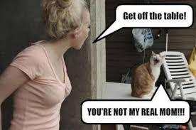 You Re Not Funny Meme - get off the table you re not my real mom meme funny humor