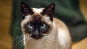 a cat co authored an influential physics paper science aaas