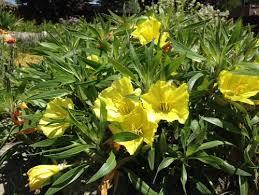 Identify Flowers - identify yellow flowers