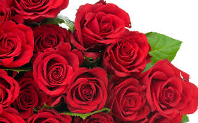 How Much Is A Dozen Roses Giving Flowers To Russian Women Love Gone Global