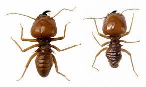 Ants In Bathtub How To Kill Termites In Firewood Hunker