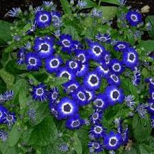 list of blue flowers names 02 newest illustration u2013 horssols com
