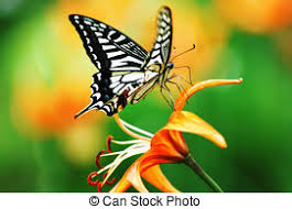 butterfly stock photos and images 207 225 butterfly pictures and