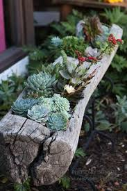 succulent planters gorgeous succulent planters instantly beautifying your home
