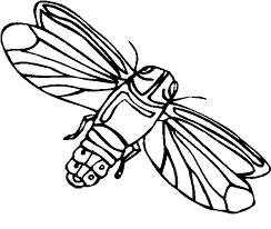 flying insect coloring pages coloringstar