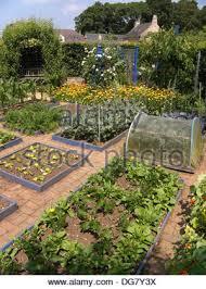 kitchen vegetable garden raised beds sweet corn lark summer august