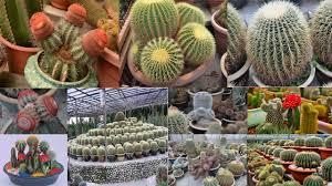 cactus garden ideas garden design ideas