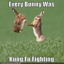 Kung Fu Meme - every bunny was kung fu fighting i can has cheezburger