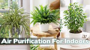 Best Plants For Air Quality by 10 Best Plants You Can Grow Indoors For Air Purification Youtube