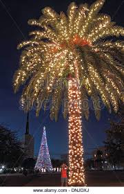 palm tree christmas lights in stock photos u0026 palm tree christmas