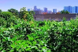 Urban Garden Denver - denver archives page 5 of 11 denver urban gardens