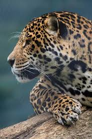 349 best art of animal prints images on pinterest animal