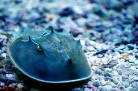 reef safe saltwater aquarium invertebrates