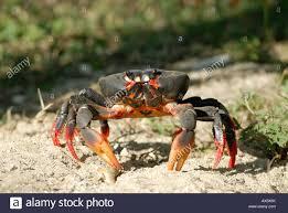 halloween moon crab