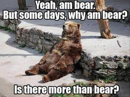 Running Bear Meme - 22 funny animal pictures of the day funny picture just funny