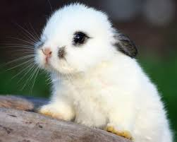 252 best bunnies images on pinterest bunny rabbits animals and