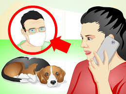 how to care for a dog with stitches 10 steps with pictures