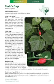 plants native to louisiana wild edible plants of texas a pocket guide to the identification