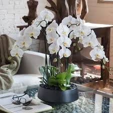 awesome looking flowers good looking flowers combine with artificial orchid arrangements