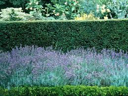 planting near a hedge hgtv