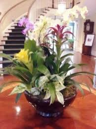 indoor plant arrangements interior plant and floral design alive expressions