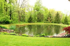 backyard pond wild ones st louis chapter backyard ideas