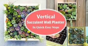 planter for succulents vertical succulent wall planter in quick easy steps diy succulent