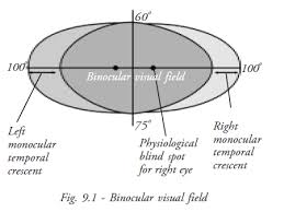 Blind Spot In Left Eye Refraction Manual Chapter 9
