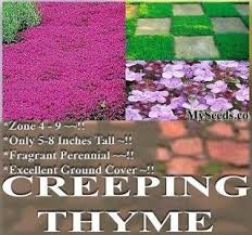 23 best for planting creeping thyme images on