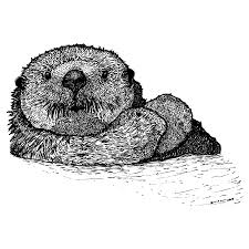 sea otter drawing by karl addison