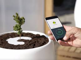 bios urn green burial concept sprouts new idea bios urn for home