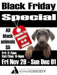humane society black friday 38 best black friday images on pinterest black friday adoption