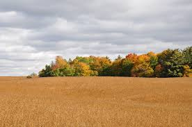 file autumn country foliage canadian thanksgiving 2012 jpg
