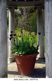large terracotta pot stock photos u0026 large terracotta pot stock