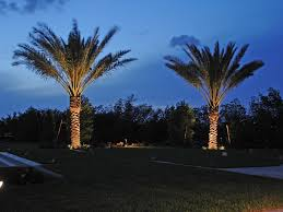 best led lights for outdoor trees bring your charleston palm trees to life at night with properly