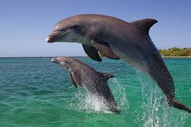 the meaning and symbolism of the word dolphin