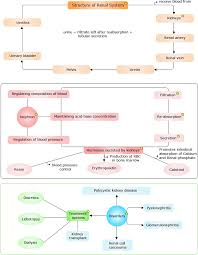 Photosynthesis Concept Map Concept Map Biology Pinterest Worksheets